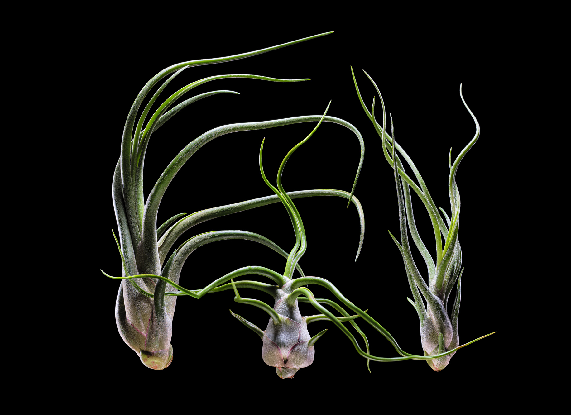 Airplants1809_JG1